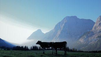 Der Tag erwacht, auf der Hochfeldern Alm. (Foto: Knut Kuckel)