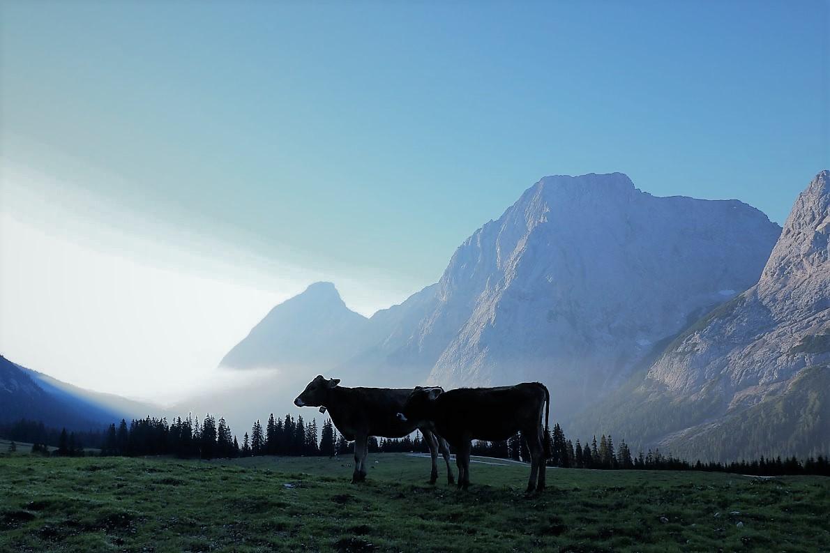 Der Tag erwacht, auf der Hochfeldern Alm. Foto: Knut Kuckel/Tirol.bayern