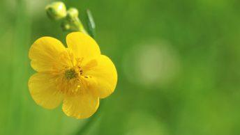 Blüten und Früchte im Mieminger Sommer. Foto: Knut Kuckel