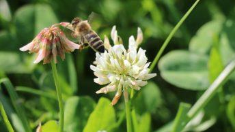 Sommer in Mieming - Blüten und Früchte. Foto: Knut Kuckel